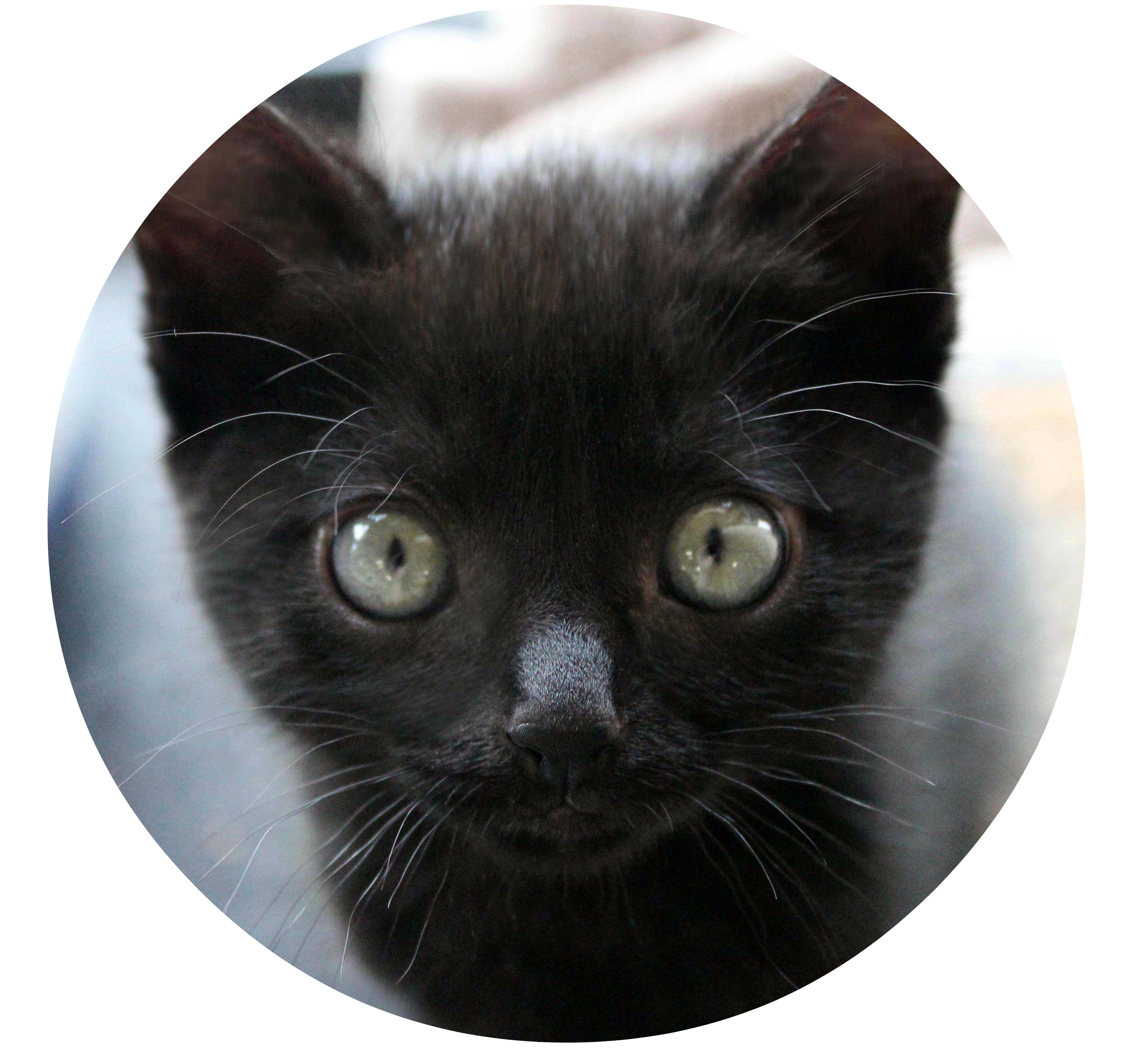 Uxbridge Cat Rescue